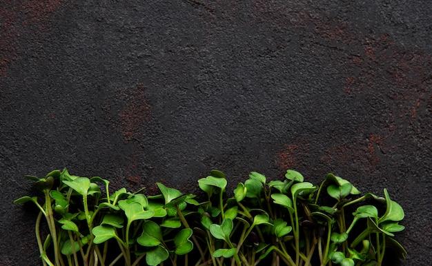 Micro verts sur un béton noir, vue du dessus