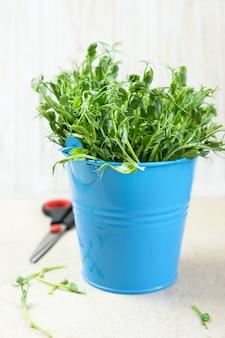 Micro verts. germes de pois mange-tout coupés et prêts à manger