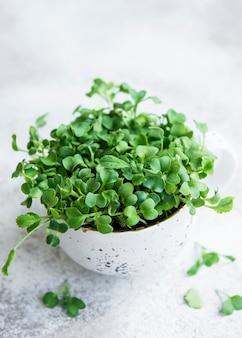 Micro-verts. graines de radis germées. microgreens en germination. germination des graines à la maison. concept d'alimentation végétalienne et saine.