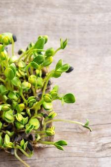 Micro verts. graines de tournesol germées, gros plan.