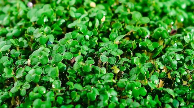 Micro verts, nourriture saine.