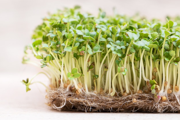 Microgreen. graines de moutarde germées sur tapis de lin bouchent