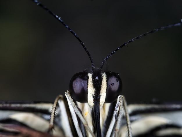 Microphotographie d'un insecte noir et blanc