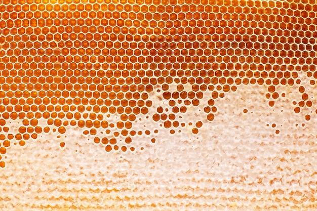 Miel d'abeille frais dans un nid d'abeille sur le gros plan léger. aliments naturels vitaminés. texture et fond