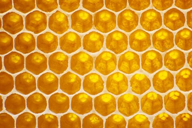 Le miel dans le peigne à la lumière gros plan