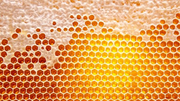 Le miel dans le peigne à la lumière de près