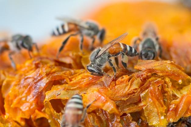 Miel frais en peigne