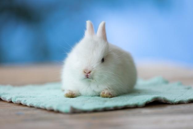 Mignon bébé lapin blanc assis sur un tissu. amitié avec le lapin de pâques mignon.
