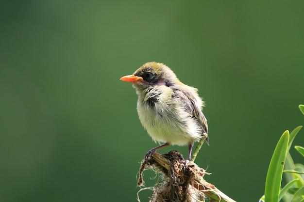 Mignon bébé oiseau sur une branche