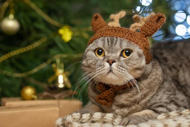 Mignon chat britannique avec un chapeau avec des cornes d'un cerf rudolph