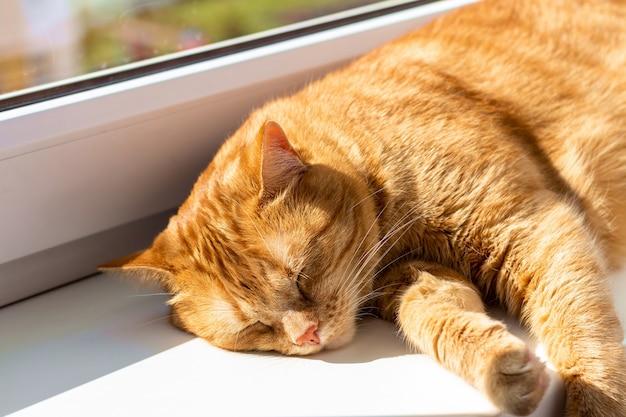 Mignon chat gingembre dormant sur le rebord de la fenêtre