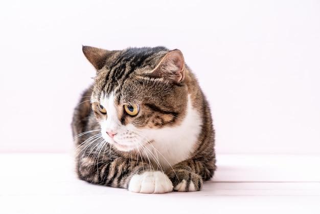 Mignon chat gris