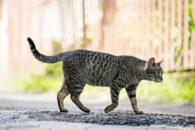Mignon chat rayé gris debout à l'extérieur