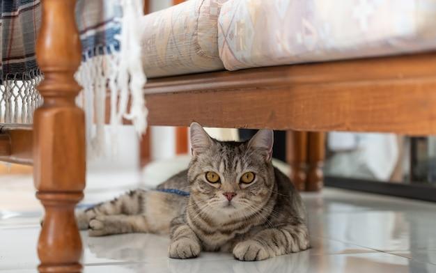 Mignon chat tigré heureux couché sous le canapé dans le salon
