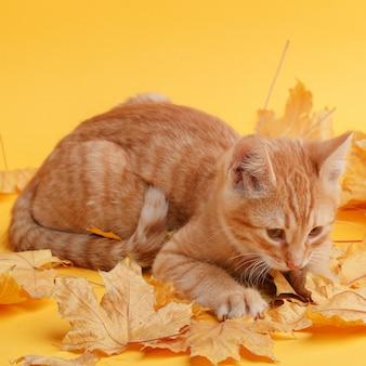 Mignon chaton au gingembre joue avec des feuilles d'automne sèches.