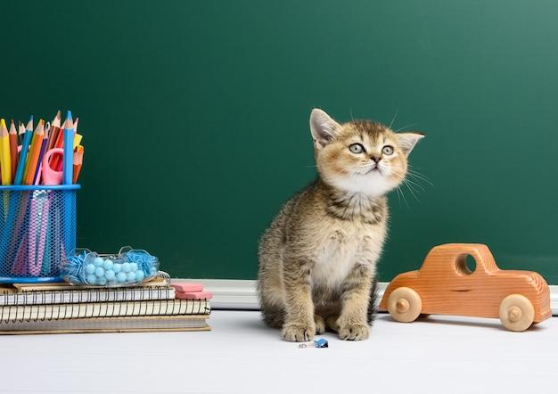 Mignon chaton chinchilla doré écossais assis droit, fond de tableau de craie verte et papeterie