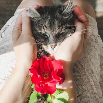 Mignon, chaton doux, couché sur les mains féminines