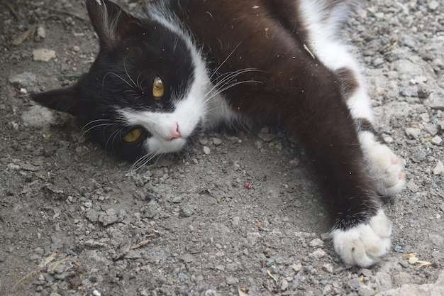 Mignon chaton noir dormir dans la rue