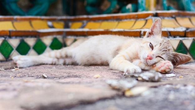 Mignon chaton orphelin dans la ville