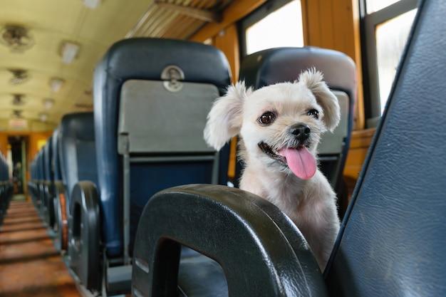 Le mignon chien dans le train