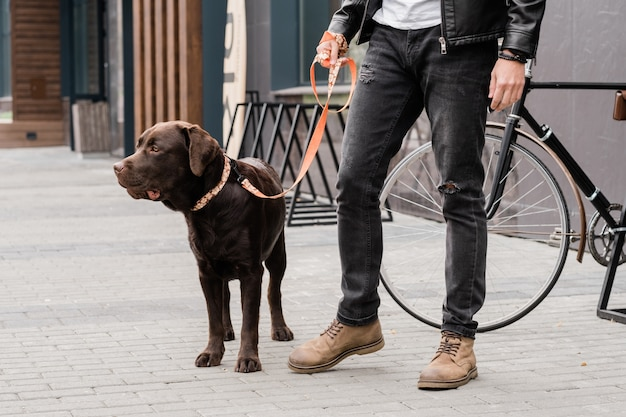 Mignon chien de race pure en laisse et son propriétaire en tenue décontractée debout sur trottoire pendant le refroidissement dans la ville