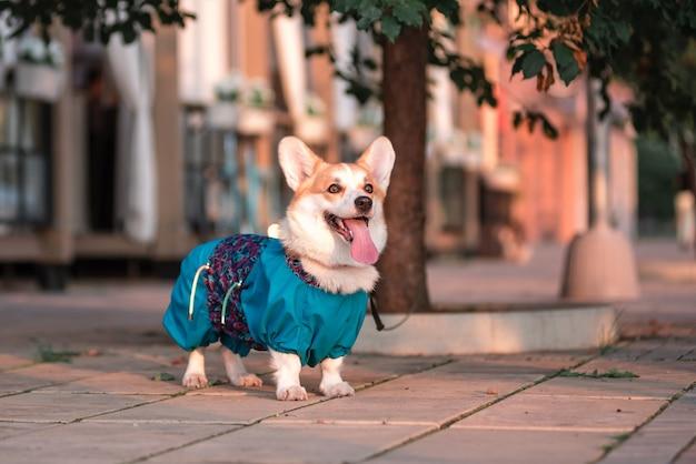 Mignon chien welsh corgi assis sur les marches de la ville. un chien dans la ville. chien en paysage urbain