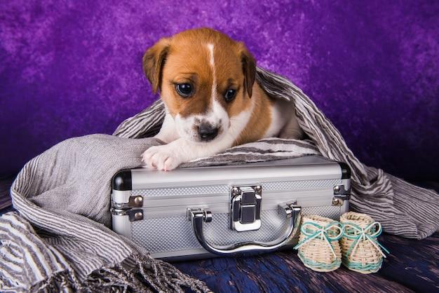 Le mignon chiot jack russell terrier est assis dans une valise pour voyager