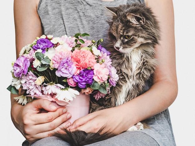 Mignon, doux chaton, bouquet lumineux et femme