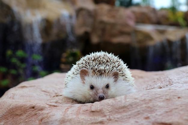 Mignon jeune hérisson sur le rocher avec fond de chute d'eau. flou artistique. concept animal et nature.