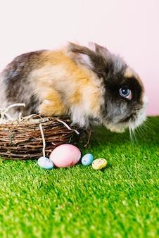Un mignon lapin brun est assis dans un panier en bois à côté d'oeufs pastel peints sur l'herbe vert vif