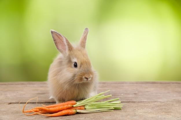 Mignon lapin de pâques brun sur bois avec des carottes