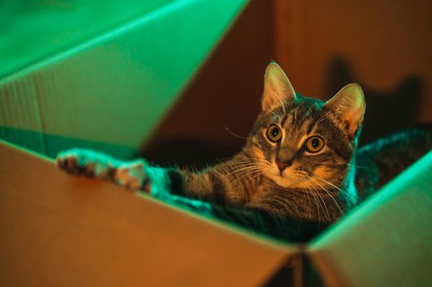 Mignon et moelleux jeune chat dépouillé qui s'étend à l'intérieur d'une boîte éclairée par des lumières orange et sarcelle