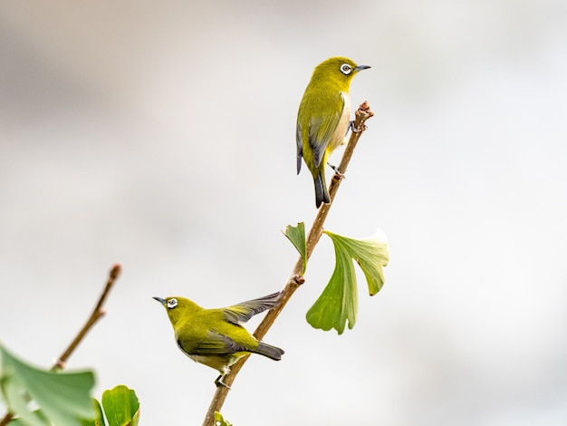 Mignon oiseau exotique debout sur une branche d'arbre au milieu d'une forêt