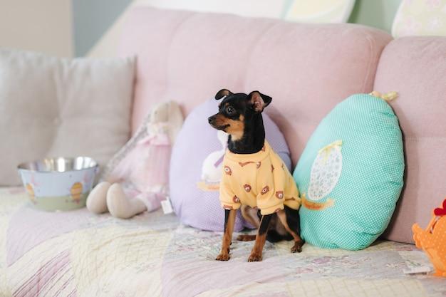 Mignon petit animal à la maison sur canapé chien en chandail jaune oreiller en forme d'oeuf pâques