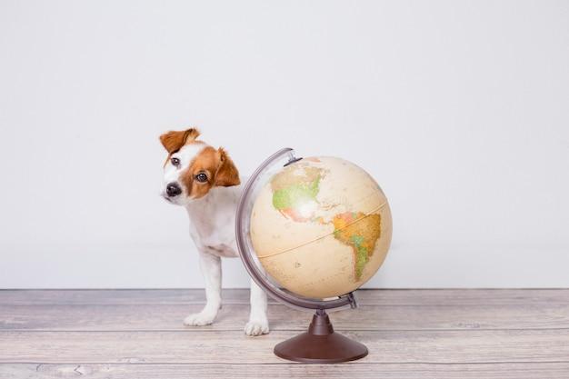Mignon petit beau chien assis sur le sol, mur blanc avec globe terrestre en plus. concept de voyage et d'éducation. mode de vie