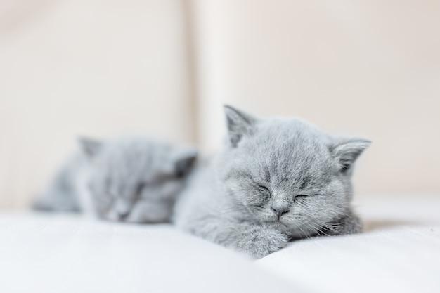 Mignon petit chat qui dort doucement sur son ventre.
