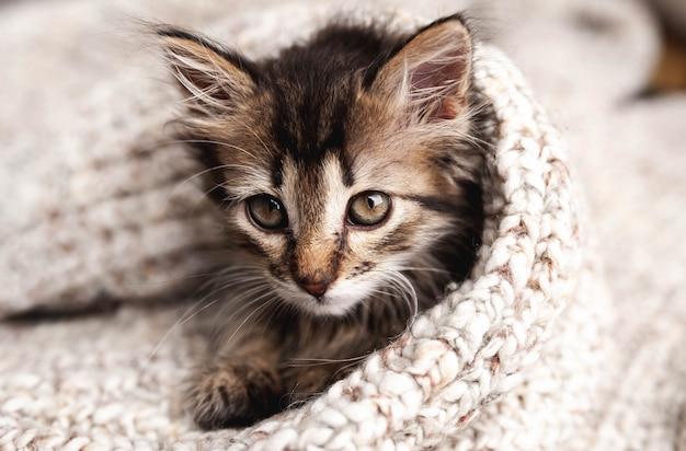 Mignon petit chaton dans une couverture douce