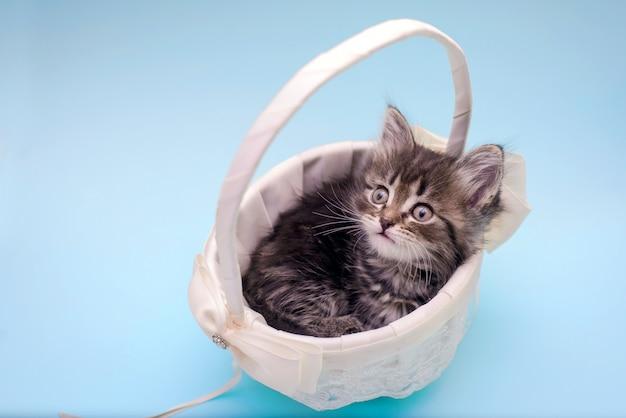 Mignon petit chaton dans un panier blanc