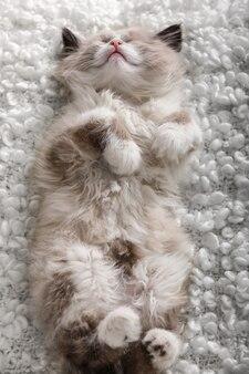 Mignon petit chaton dormant sur un plaid blanc, gros plan