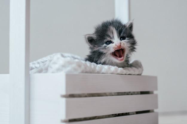 Mignon petit chaton gris et blanc assis dans un panier en bois. bel animal de compagnie à la maison