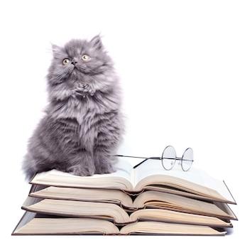 Mignon petit chaton et livres