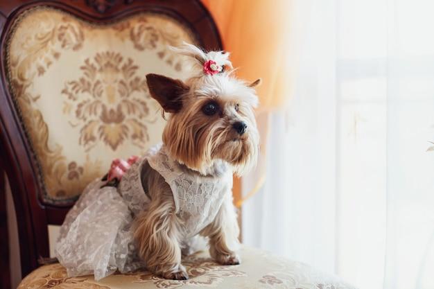 Mignon petit chien assis dans un costume portant une robe de mariée