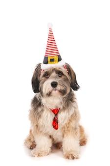Mignon petit chien avec chapeau de fête et noeud papillon contre blanc