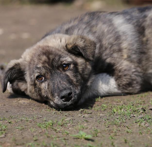 Mignon petit chien cur reposant sur le sol