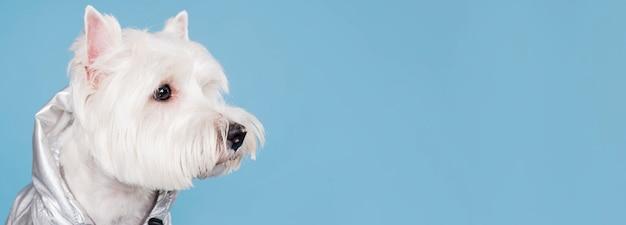 Mignon petit chien avec espace copie