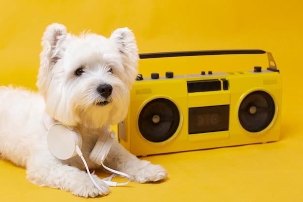Mignon petit chien avec lecteur de cassettes