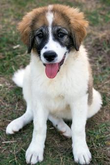 Mignon petit chien. petit chien est assis dans le champ d'herbe au printemps, le style de cheveux rugueux.