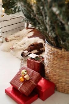 Mignon petit chien sur un salon décoré de noël