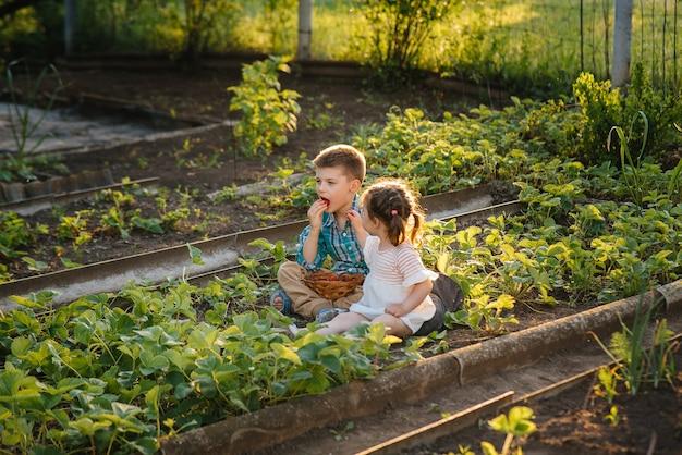 Mignon petit frère et soeur mangeant des fraises