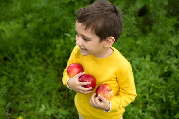 Mignon petit garçon cueillette des pommes dans un fond d'herbe verte à la journée ensoleillée. alimentation saine.